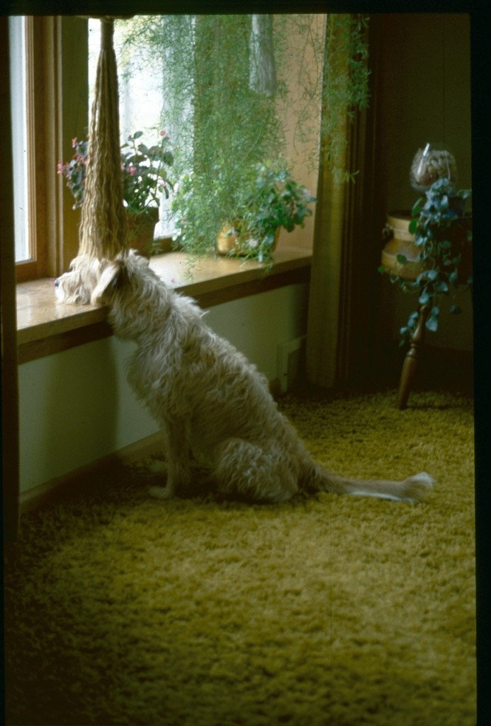 Henry at the window, 1978